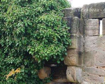 Natur an der Mauer