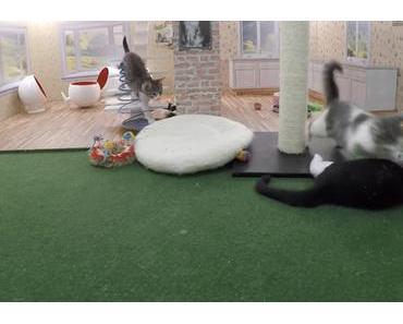 The Kattarshians – Eine Katzen Reality Show aus Island