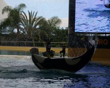 Faszination Wal- und Delfinbeobachtung