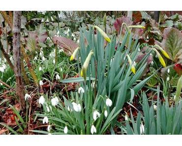 Foto: Vom Schneeglöckchen zur Osterglocke