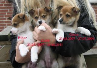 Lundehund: Systematische Tierquälerei in der Hundezucht