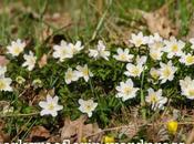Frühlingsboten Markgräflerland