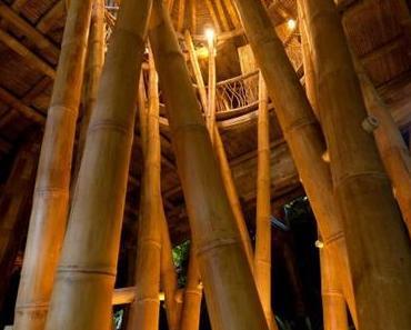 Bauen mit Bambus: so geht es ökologisch!