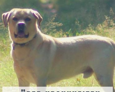 Was jeder (Hundehalter) über die Bekämpfung von Krankheiten wissen sollte
