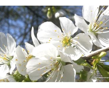 EngelBotschaft April 2017: Erhöhe deine Lebensenergie & genieße dein Leben