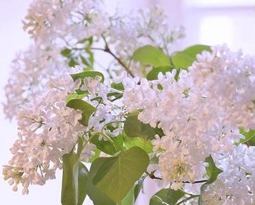 Friday-Flowerday 17/17