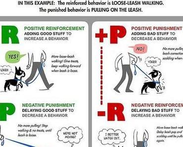 Positive/ Negative Verstärkung/ Bestrafung