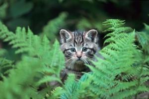 """""""Wildkatzen. Ihr heimliches Leben im Solling"""""""