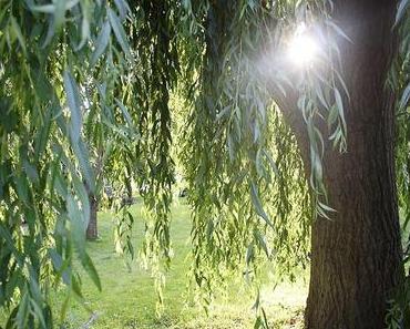 Die Weide