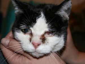 Katze Mathilda braucht dringend Unterstützung
