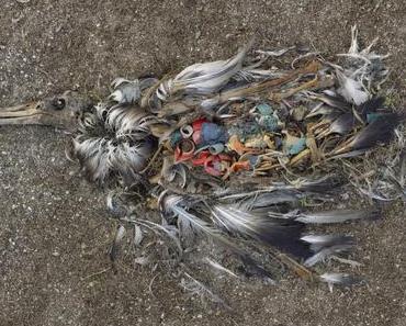 Wie der Plastikmüll Umwelt & Natur zerstört
