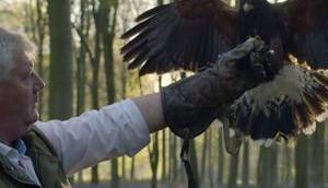 haben doch einen Vogel! Kunst Falknerei