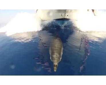 Wale an Menschen: Lasst uns in Ruhe!