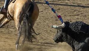Stierkampf subventionieren, aber kein Geld Opfer häuslicher Gewalt