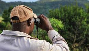 Falter-Spotting entdeckt schönsten Faltcaravan
