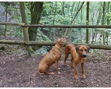 Sonnenschein und viele Steigungen – der Westerwald-Steig mit Hund – Etappe 1