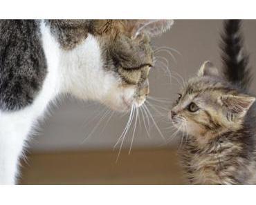 Wann sind Katzen ausgewachsen?