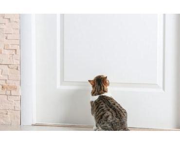 Deine Katze kratzt an der Tür? So kannst du es ihr abtrainieren