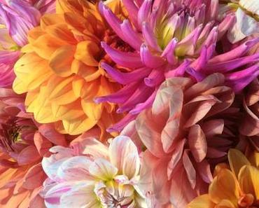 Friday-Flowerday – oder – Frisch aus dem Garten: Dahlien und Rosen
