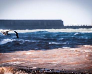 Reite-den-Wind-Tag – der internationale Ride the Wind Day
