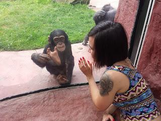 Affenliebe und Palmöl