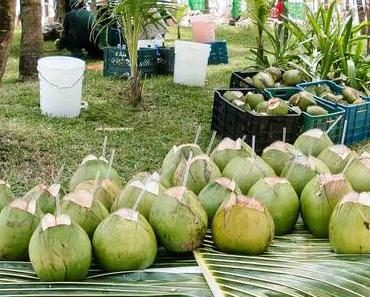 Internationaler Tag der Kokosnuss – World Coconut Day