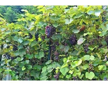 Wein im Garten – Herbst 2017