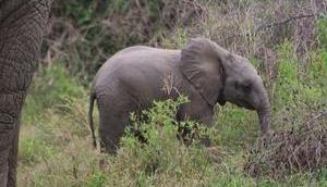 südliche Afrika Tiere unberührte Landschaften