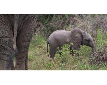 Das südliche Afrika – Tiere und unberührte Landschaften