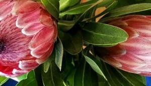Foto: Protheen Vase