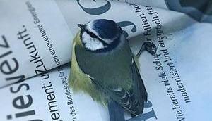 Verletzter Vogel gefunden: Wisst ihr, müsst?
