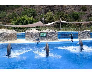 Highlight: Delfin-Show im Palmitos Park auf Gran Canaria