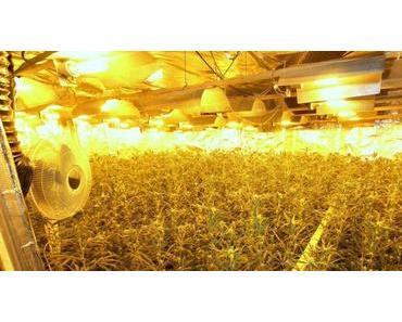 Die Cannabis-Plantage von Bremen