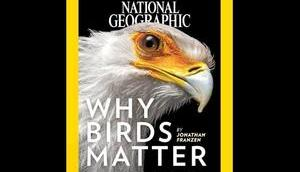 National Geographic Cover letzten Jahre