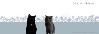 3 Tipps um Katzen zum Trinken zu animieren ||Futterplatz.de