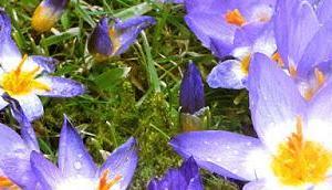 Frühlingsblumen ihre Symbolik
