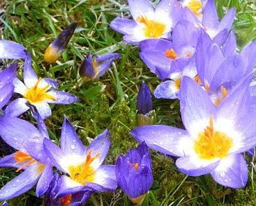 Frühlingsblumen und ihre Symbolik