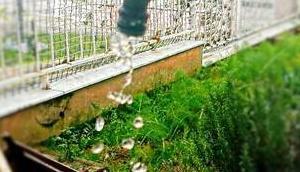 Dolce Vita: (Un-)schöne Überraschungen Belpaese