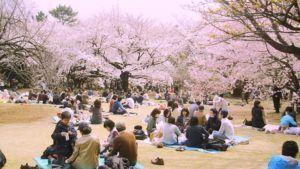 Hanami – Kirschblütenfest 2018