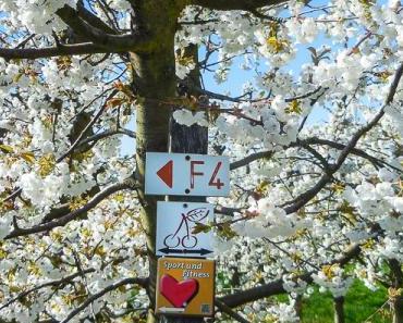 Kirschblütenwanderung im Frühling