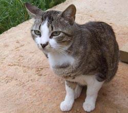 Eine Kastrations-Patenschaft verhindert Katzenleid