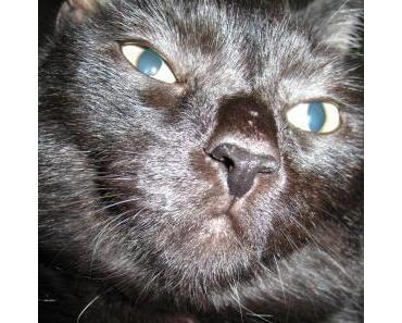 Die Katzenphobie – Ailurophobie