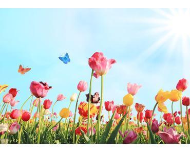 Wann und wo ist die Tulpenblüte in Holland am schönsten?