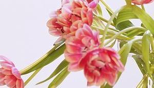 Friday-Flowerday 16/18