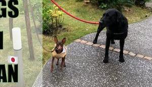 Japan: 4ter Vlog Hunde Japan