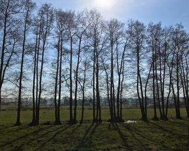 Moor & Heide im DümmerWeserLand