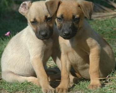 Amtsgericht Gelsenkirchen: Hund hat Persönlichkeitsrechte