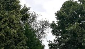 Foto: Bäume Ostwallschule