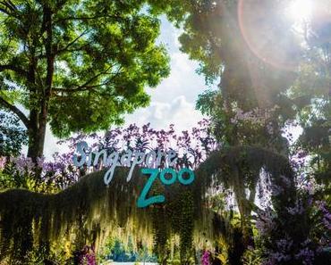 Singapur Zoo mit Kindern Erfahrungsbericht