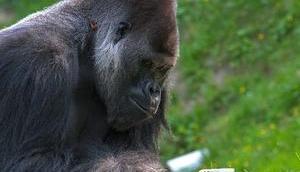 Gorilla-Glas übersteht Abstürze
